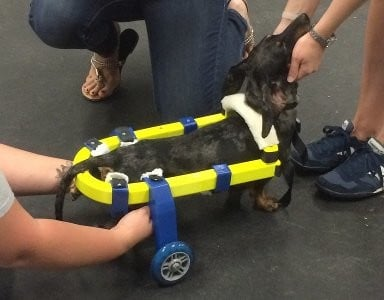 The Story of Tazo's 3D Printed Prosthetic Dog Cart