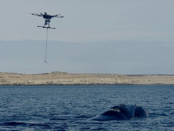 A quadcopter collecting data from whales in need of new landing gear.
